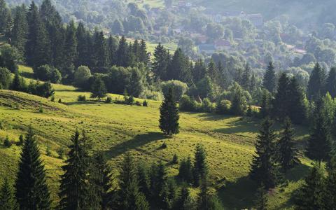 在山谷的绿色森林