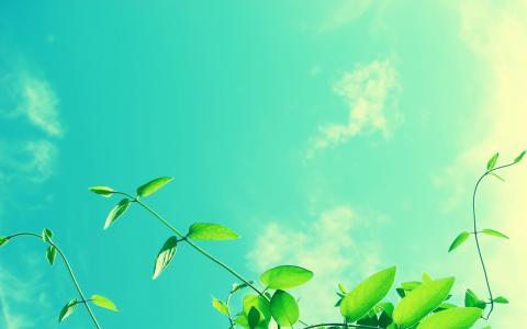 清新的天空