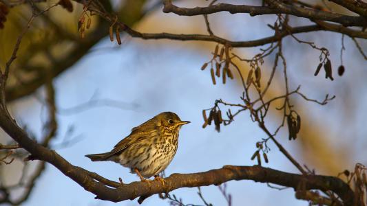 在树上的小鸟