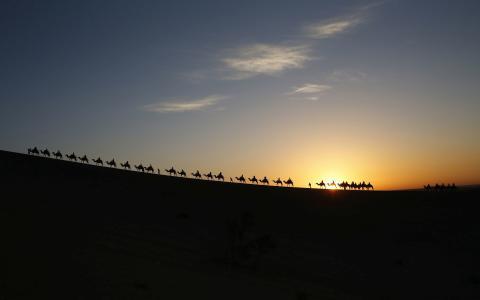 骆驼走在日落时分