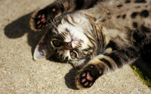 俏皮的小猫