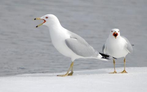 愤怒的海鸥