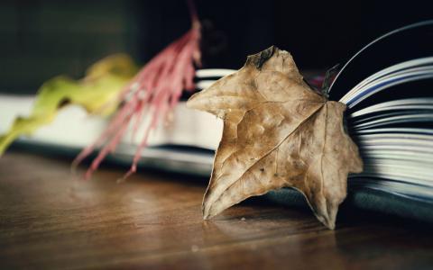 在打开的书上的叶子