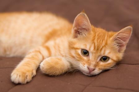 2020超可爱的猫咪图片
