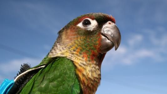 绿色的金刚鹦鹉