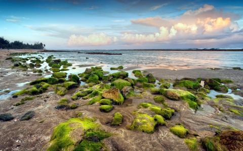 长满青苔的岩石在海滩上