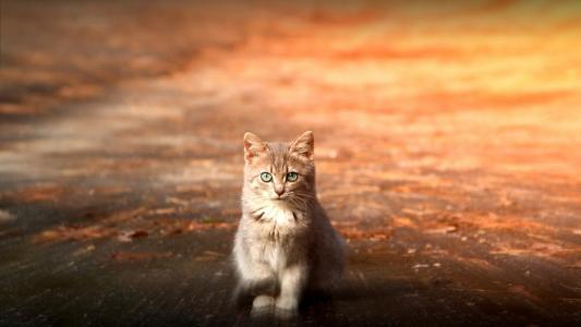 绿眼睛的小猫