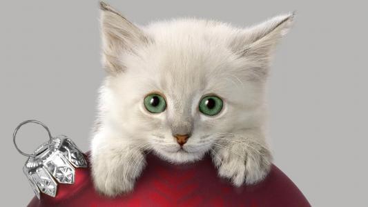 在一个圣诞节中看不中用的物品的白色猫