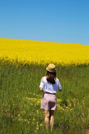 漫步在金黄色花海中