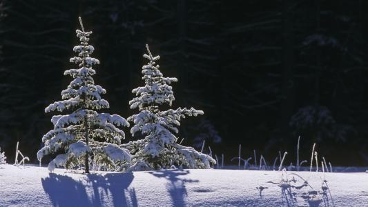阳光照在白色的雪地上