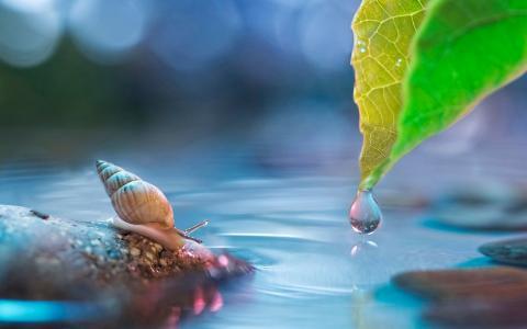 在水中的蜗牛
