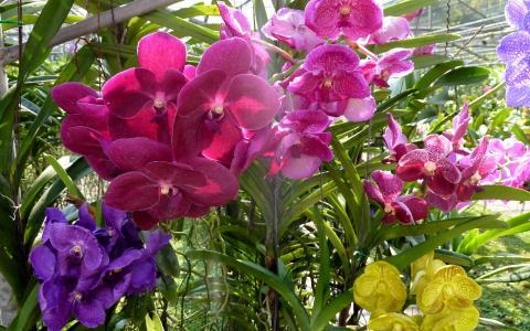 美丽的兰花在花园里