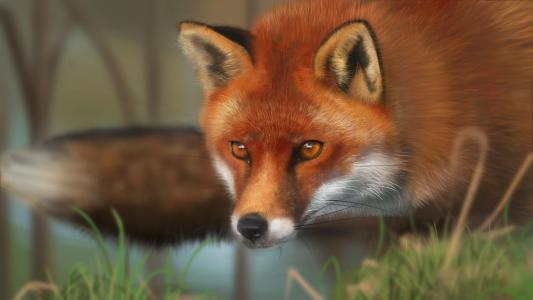 灿烂的狐狸