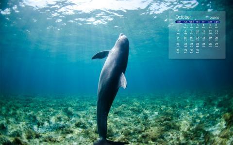 2019年10月海底世界日历