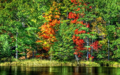 秋天在森林里