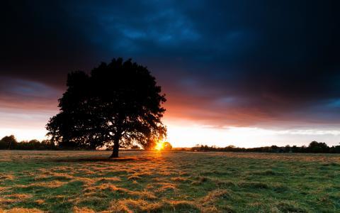 日出在绿色的田野