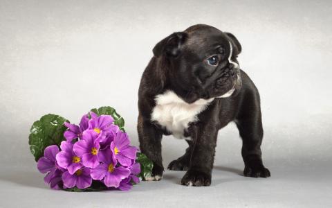 黑色的小狗