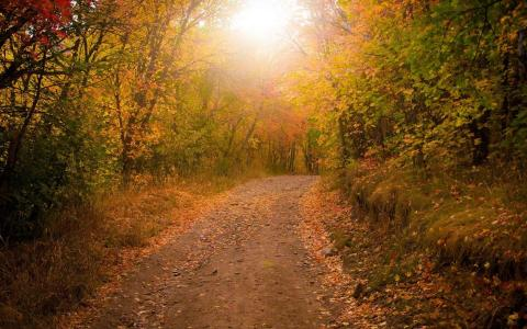 在金色的森林中的路径