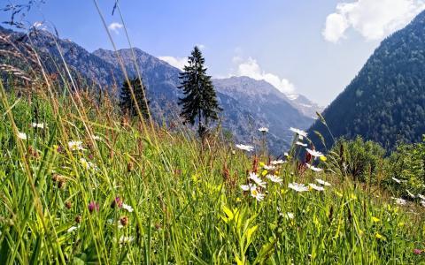 在山上的绿草