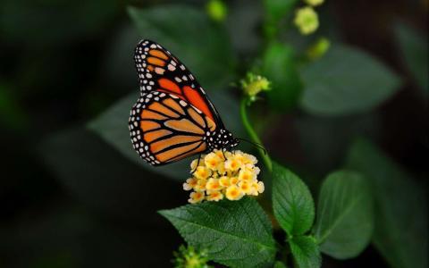 蝴蝶在花上