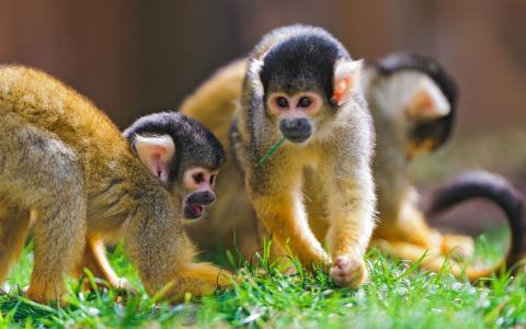 好玩的猴子