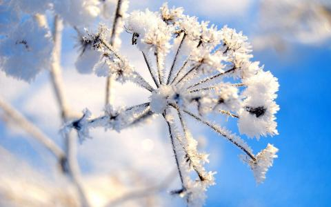 美丽的冬天