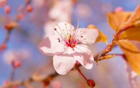 浅粉红色的花朵