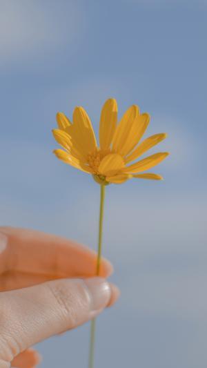 一朵可爱的小黄花