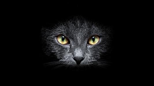 灰色的猫咪