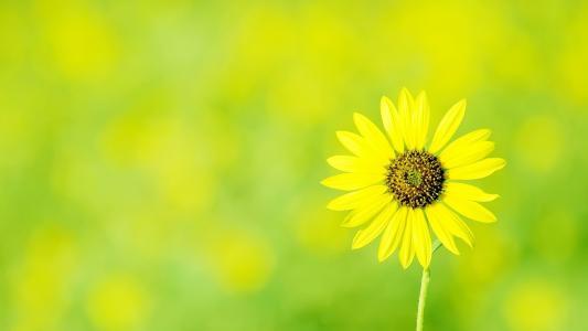 摄影下的清新唯美花朵