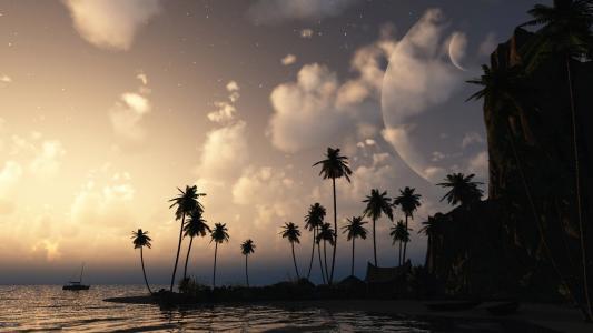 在岛上的棕榈树