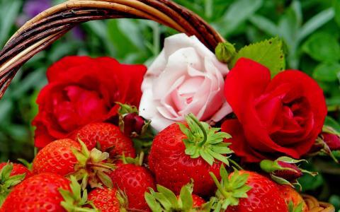 草莓和玫瑰