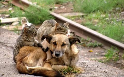 可爱的友谊