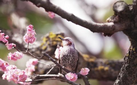 美丽的鸟之间的花朵