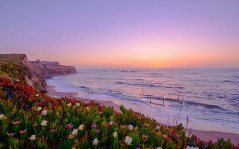 海岸充满了鲜花