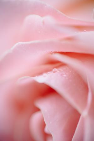 娇艳欲滴的花瓣