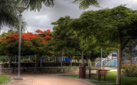 在公园里的树木