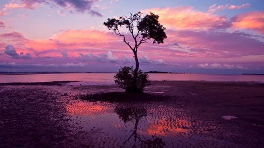 粉色的夕阳