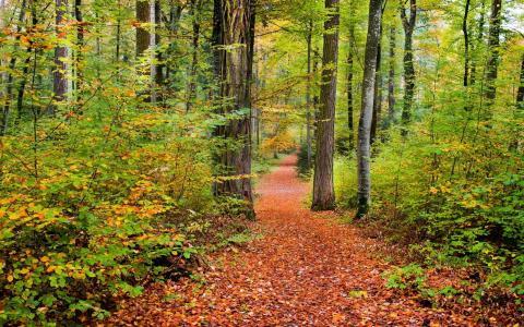 在森林里的秋天路径