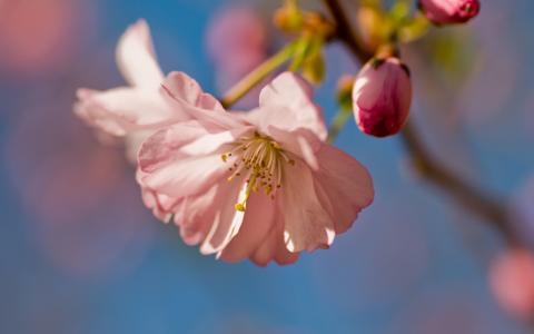 粉红的花朵