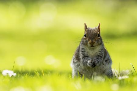 乖巧可爱的松鼠