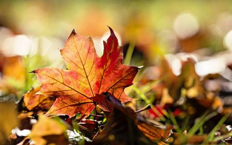 秋天的叶子