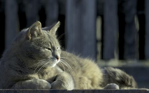 懒惰的猫在阳光下