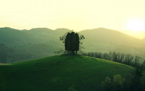 绿树在山上