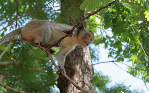 猴子在树上