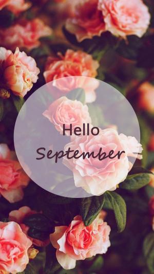 九月你好唯美浪漫花卉