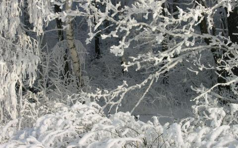森林里的大雪
