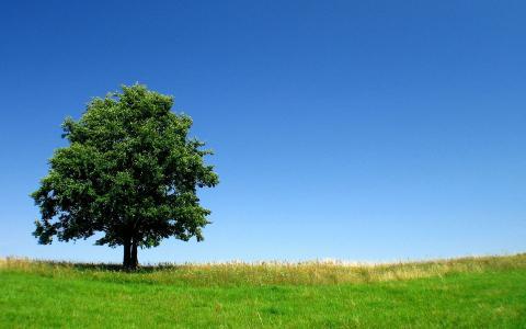 孤独的树在绿色的田野