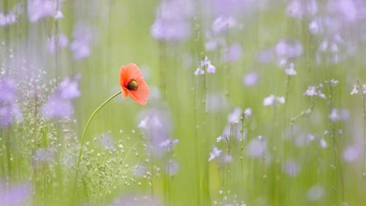 最美的花朵