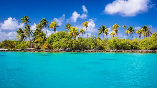 在岸上的棕榈树